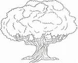 Coloring Tree Cherry Pages Trees Printable Getdrawings Getcolorings Sheets sketch template
