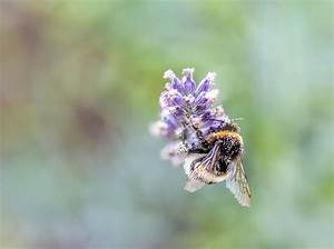 Wie Machen Bienen Honig : wie bienen uns mit ihrer luft gesund machen hey dresden ~ Whattoseeinmadrid.com Haus und Dekorationen