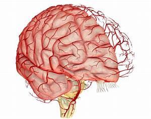 Как укрепить сосуды головного мозга при гипертонии