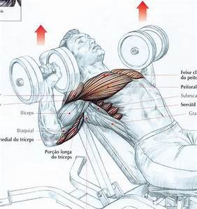 17 Best Images About Muscle Diagrams On Pinterest