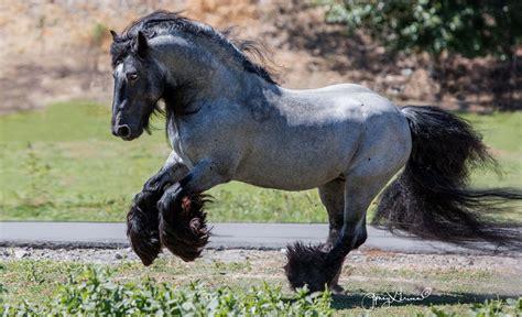 horses roan rare most horse gypsy caballos gray grullo colors dun caballo inspiremore majestic parecen vivas obras arte coats robes