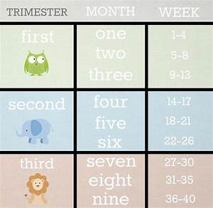 The 25+ best Pregnancy trimester chart ideas on Pinterest ...