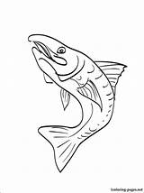 Trout Coloring Rainbow Pages Brook Drawing Printable Getdrawings sketch template
