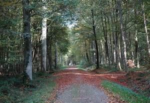 Foret à Bois : for t domaniale de creuse bois et for ts ~ Nature-et-papiers.com Idées de Décoration