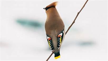 Different Brown Bird Birds Wallpapers