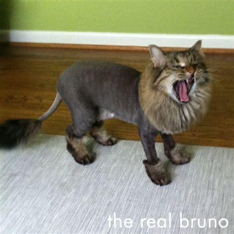 cat   lion cut omg  cute sphynx cats