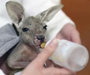 Funny baby animals |Funny Animal