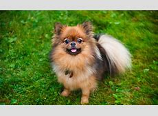The Benefits of Owning a Small Dog NuVet Labs Blog