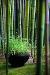 17 Best ideas about Bamboo Garden on Pinterest | Bamboo japanese bamboo garden design