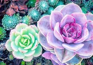 127 Stunning Desert Plants - FTD.com