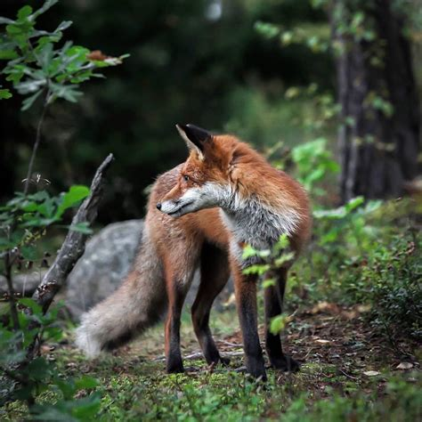Photographer Shoots Finnish Forest Animals Like They re