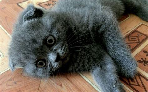 可爱小猫咪图片大屏幕高清电脑壁纸_桌面壁纸_电脑桌面壁纸高清_图片大全_桌面背景壁纸图片_酷图吧壁纸下载
