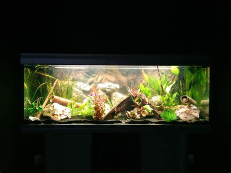 mise en eau aquarium photos d aquarium page 315