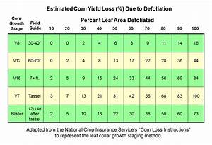 Corn Hail Damage And Other Storm Issues