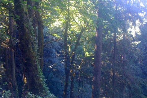 forest park portland attractions review  experts