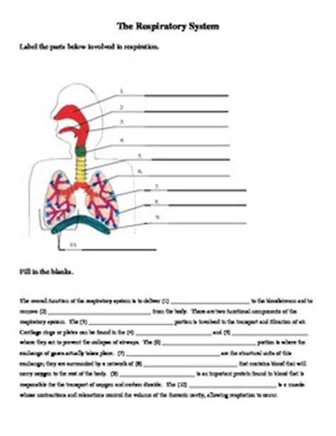 respiratory system labeling and cloze worksheet by jer520