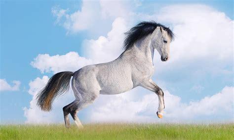 white horse desktop wallpapers hd    windows wallpaperscom