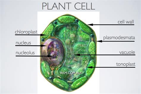 webmelasa animal cell structure  labels