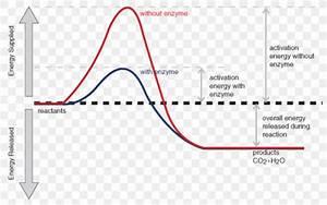 30 Energy Diagram For Endothermic Reaction