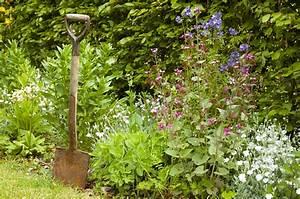 Hortensien Wann Pflanzen : wann hecke pflanzen liguster pflanzen schwarzgr ner ~ Lizthompson.info Haus und Dekorationen