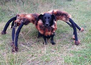 Giant mutant spider dog let loose unsuspecting public hilarious online prank