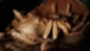 tarantula shedding skin time lapse molting tarantula time lapse uncrate