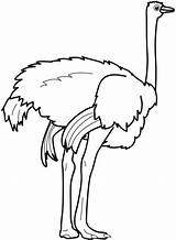 Ostrich Coloring Clipart Feet Strong Pages Outline Emu Bird Printable Getcoloringpages Clipartmag Colorluna sketch template
