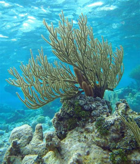97 Best Images About Coral  Grand Cayman And More On