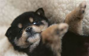 Puppies images Tiny Cute Puppy HD wallpaper and background ...
