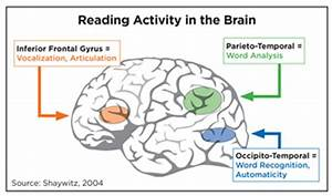 Knowledge Acquisition and Reading | iRead