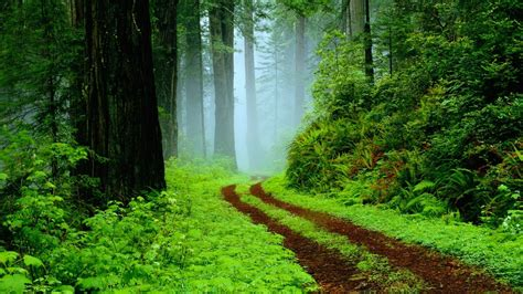 wallpaper tropical rain forest pathway foggy nature
