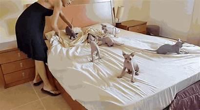 Bed Lit Femme Woman Son Kitten Imberbes