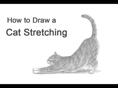 draw  cat stretching youtube