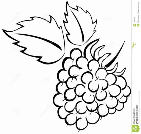 raspberry bush clipart black and white raspberry stock vector image of nature food dessert
