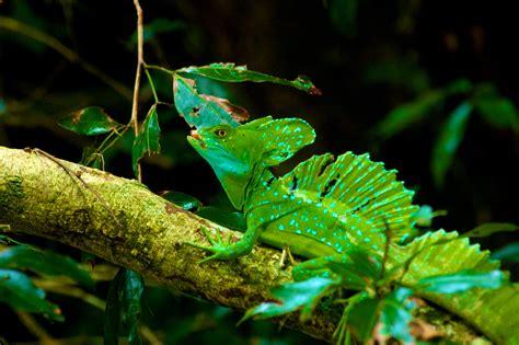 tips  capturing gorgeous rainforest photographs