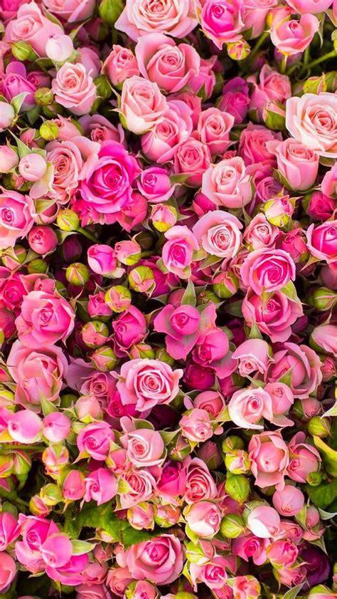 iphone flower wallpaper 4k