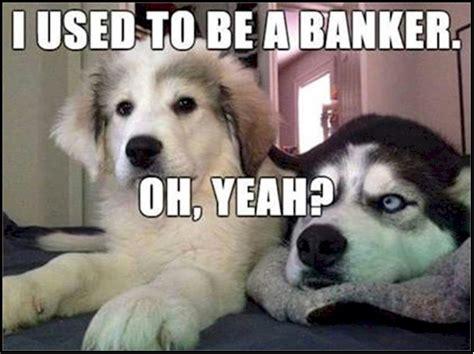 funny dog jokes weneedfun