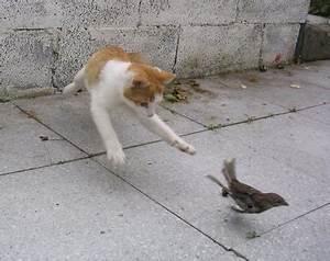 Anti Griffe Chat : collier anti chasse pour chat ~ Premium-room.com Idées de Décoration
