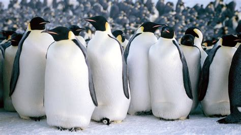 """""""55"""" Sea Level Rise Opening Reception & March Of The Penguins Movie Screening  Danville Funcheap"""