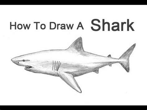 draw  shark great white youtube