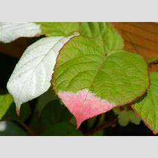 Database Of Common Names Of Plants Alphabetical Lists