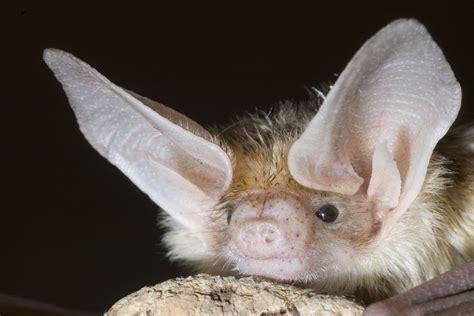 bats animals  english