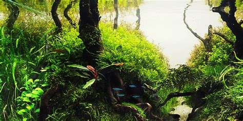 Style Aquascape by Understanding Jungle Aquascaping Style The Aquarium Guide