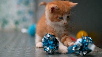 Slow Thing Motion Kittens Ever Mo Imgur