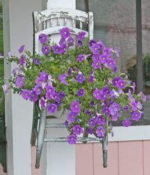 how to maintain petunias 1000 ideas about petunia plant on pinterest petunias flower seeds and petunia care