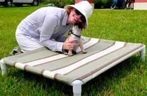 Coolaroo Dog Beds by Diy Elevated Dog Bed Like Kuranda Pet Project