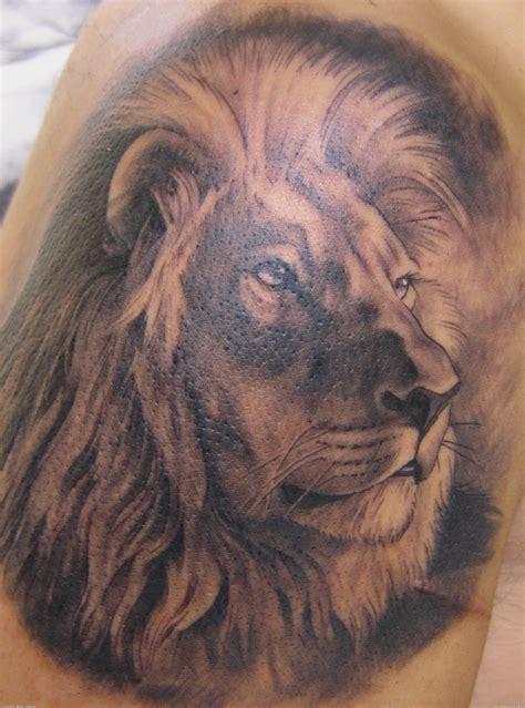 legendary amazing lion tattoo designs media