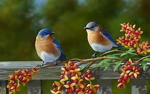 geniş ekran: renkli kuşlar hd masaüstü duvar kağıdı güzel ...