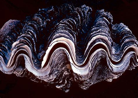 shells  swell beautiful examples  seashell photography