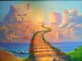 cat heaven proof that cats go to heaven